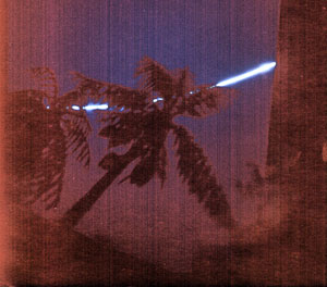 solarprint-palm-tree.jpg